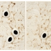 Soft Cell Tissue 54 & 55 - by Jessica Drenk - Toilet paper and wax - 21 x 26 x 4 inches - year 2013 - at Paia Contemporary Gallery